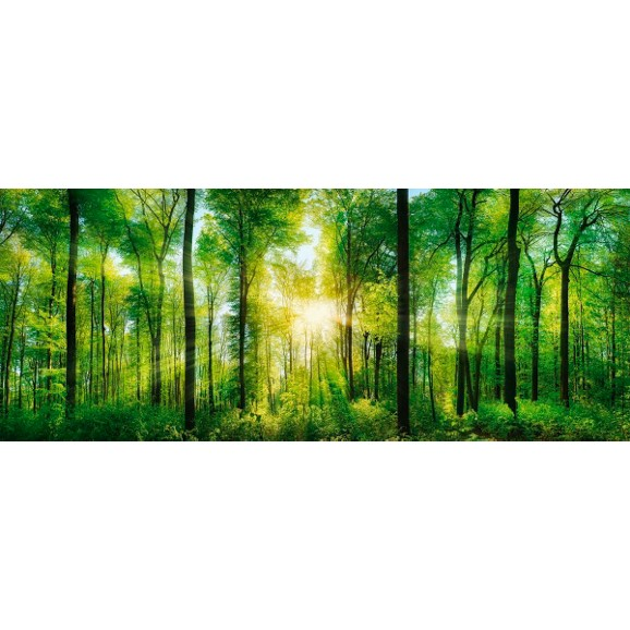 glasbild green sunshine ca 50x125x2cm bilder bilder. Black Bedroom Furniture Sets. Home Design Ideas